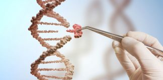 Sujetbild: DNA