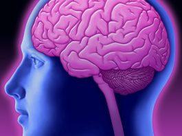 Symbolbild: Gehirn